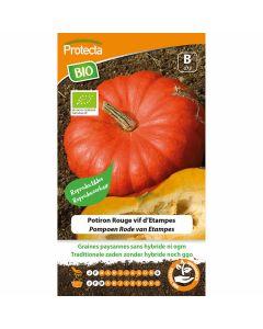 pompoen-kweken-pompoenzaden-zaaien-rode-van-etampes-oranje-biologisch-onbehandeld-protecta-ecostyle
