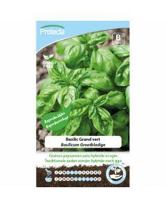 Basilicumzaadjes-Grootbladige-Protecta-ecostyle-reproduceerbaar-zaadvast-tuinkruiden-kweken-moestuin-ecologisch
