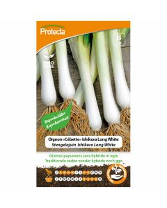 pijpajuin-kweken-stengelajuin-zaaien-groentezaad-ishikura-long-white-protecta-ecostyle