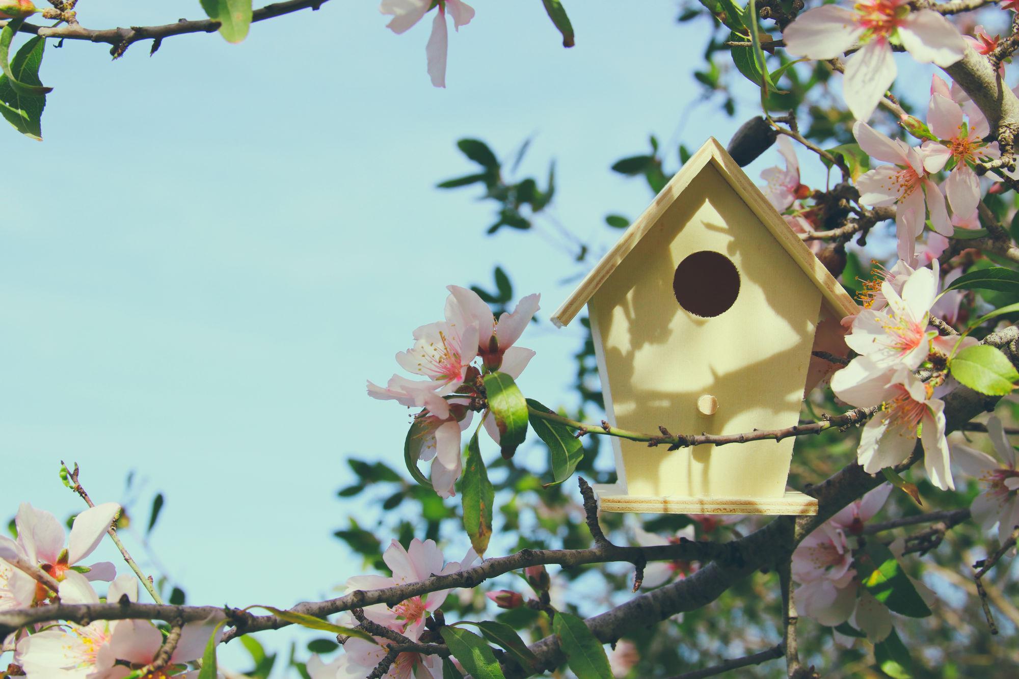 Hoe een vogelhuisje ophangen? 5 tips!