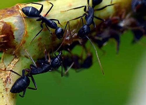 Mieren bestrijden in huis en tuin