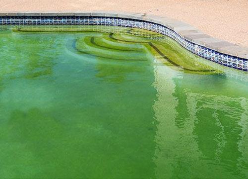 Groen zwembadwater? 4 tips!