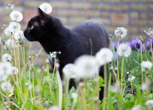 Katten verjagen uit je tuin: hoe doe je dat?