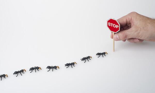 Mieren in opmars!