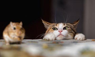 Help, muizen in huis!