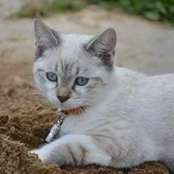 Katten Verjagen Uit Je Tuin Hoe Doe Je Dat
