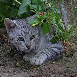 Katten verjagen uit je tuin for Kattenpoep in de tuin